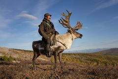 乘坐驯鹿的老蒙古人 图库摄影