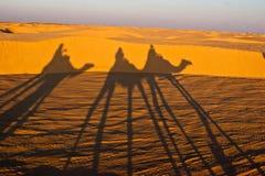 乘坐骆驼的人们 免版税库存照片
