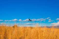 乘客反对蓝天的飞机着陆 免版税库存图片