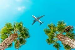 乘客在棕榈树上的飞机飞行反对天空蔚蓝 库存图片