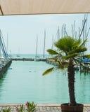 乘快艇,豪华,航行概念 巡航乘快艇在Balaton湖海岸,匈牙利的著名度假区 游泳i的两只鸭子 免版税库存图片