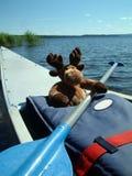 乘独木舟的麋 库存照片