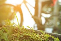 乘驾自行车 免版税库存照片