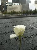 九十一纪念品的白玫瑰 库存图片