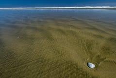 九十个英里海滩,新西兰 免版税库存图片