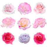 九朵玫瑰拼贴画  免版税库存图片