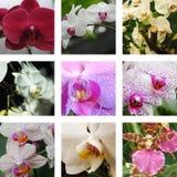 九朵花和兰花 图库摄影