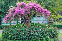 九重葛和另一棵植物在庭院里 免版税库存图片