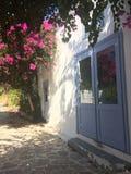 九重葛花在有一个蓝色门的一个白色房子附近增长, 库存照片