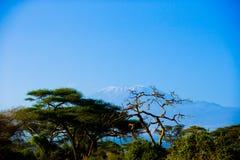 乞力马扎罗在Amboseli 免版税库存照片