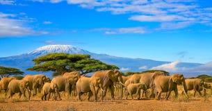 乞力马扎罗坦桑尼亚非洲大象徒步旅行队肯尼亚 库存图片