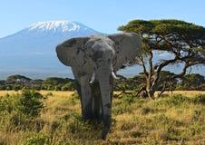 乞力马扎罗大象 免版税库存图片