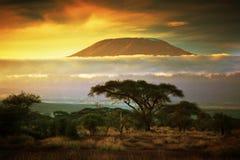 乞力马扎罗山。大草原在Amboseli,肯尼亚 免版税图库摄影