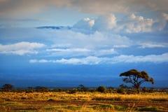 乞力马扎罗山。 大草原在Amboseli,肯尼亚 免版税图库摄影