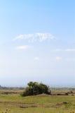 乞力马扎罗山画象  Amboseli,肯尼亚 库存照片