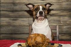 乞求假日宴餐的 图库摄影