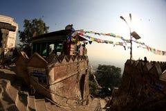 也古老在复杂小山加德满都已知的生存猴子上面胡闹零件宗教罗猴swayambhunath寺庙那里谷 免版税图库摄影