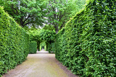 维也纳,奥地利- 2016年5月15日:在schonbrunn庭院的绿色迷宫 图库摄影