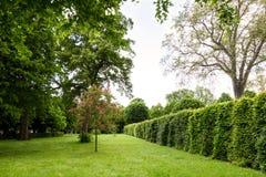 维也纳,奥地利- 2016年5月15日:在schonbrunn庭院的绿色迷宫 免版税库存图片