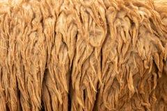 也背景概念原始的软性热心羊毛 免版税图库摄影