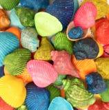 习惯五颜六色的壳特写镜头 库存图片