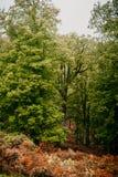 乡下五颜六色的森林阿尔及利亚,非洲 免版税库存图片