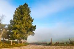 乡下公路在一个有雾的有薄雾的早晨 库存图片