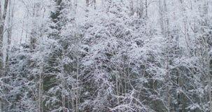 乡下公路在冬天森林里 股票视频