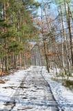 乡下公路在冬天森林里 免版税库存图片
