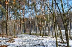 乡下公路在冬天森林里 库存照片