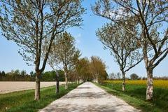 乡下公路在春天 库存照片