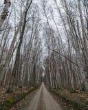 乡下公路在春天 库存图片