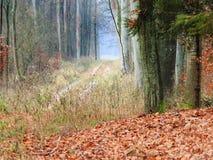 乡下公路在森林里在有薄雾的天 免版税库存图片