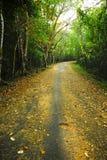 乡下公路在泰国自然公园。 免版税图库摄影