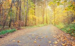 乡下公路在秋天森林里,隐蔽 芬兰 库存图片