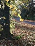 乡下公路在秋天 库存照片