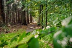 乡下公路在高veluwe的荷兰森林里 免版税图库摄影