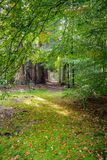 乡下公路在高veluwe的荷兰森林里 免版税库存照片