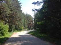 乡下公路步行 库存图片