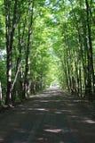 乡下公路美国 免版税库存图片