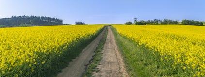 乡下公路通过一个黄色油菜领域 库存照片