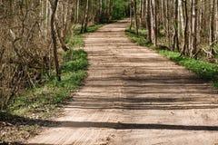 乡下公路通过春天桦树森林 库存图片