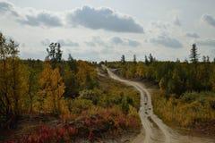 乡下公路通过森林 免版税图库摄影