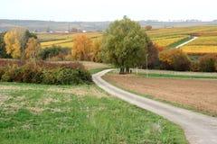 绕乡下公路,德语Wein Strasse 图库摄影