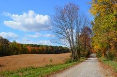 乡下公路&金黄领域在一晴朗的秋天天 免版税图库摄影