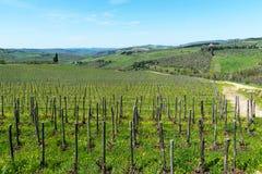 乡下和葡萄园在Chianti地区,托斯卡纳,意大利全景  库存图片