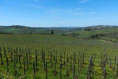 乡下和葡萄园在Chianti地区,托斯卡纳,意大利全景  免版税库存图片