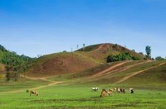 乡下在泰国 免版税库存照片