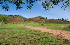乡下在泰国 库存图片