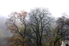 乡下在秋天 库存照片